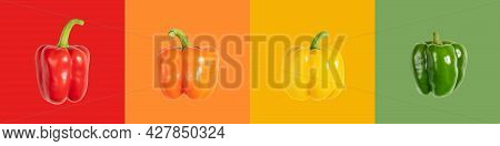Colorful Bell Peppers Banner. Red, Orange, Yellow And Green Peppers On A Multicolored Background. Pe