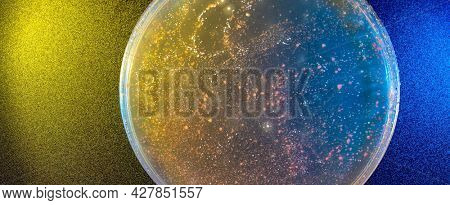 close up petri of dish with microbe colony