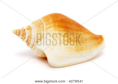 A spiral seashell isolated on white background. poster