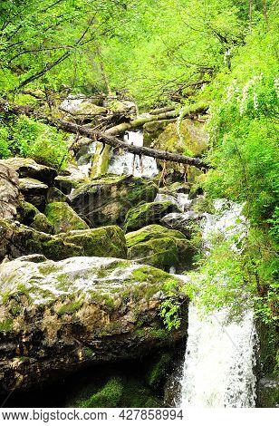 A Small Turbulent River Cascades Through The Forest, Skirting The Fallen Trees And Stones On Its Way