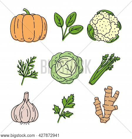 Vegetable And Herbs Sketch. Pumpkin, Spinach, Cauliflower, Dill And Cabbage. Celery, Herb, Garlic, P