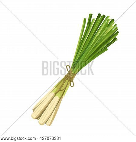 Bunch Of Green Lemongrass, Vegetarian Food, Healthy Menu. Growing Herbs, Salad And Meals. Isolated V