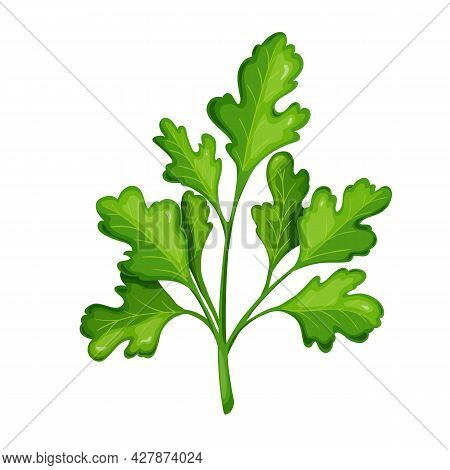 Green Cilantro, Vegetarian Food, Healthy Menu. Herbs , Salad And Meals. Isolated Vector Illustration