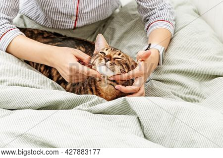 Modern Young Girl In Pajamas Lying In Bed And Caress Her Favorite Bengal Cat. Pet In Hands Of Hostes