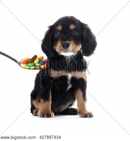 Cute English Cocker Spaniel Puppy And Spoon Full Of Different Pills On White Background. Vitamins Fo