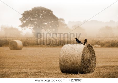 Hayfield At Harvest