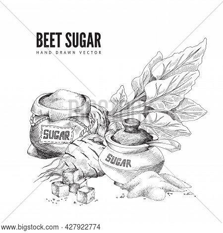 Vector Design Of Poster With Beet Sugar, Natural Food Sweetener.