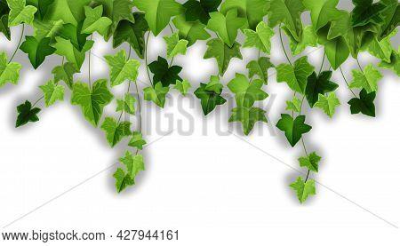 Spring Ivy Plant Vector Background, Green Climbing Vine Leaf Illustration, Garden Creeper Liana Plan