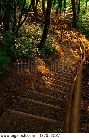 Fable Wood Land Stairway Path In Golden Sun Light In Evening Time Vertical Forest Landscape Photo