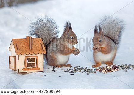 Two Wild Red Squirrels In The Park Next To The Feeder, Fluffy Squirrels Eat Nuts And Seeds In Winter