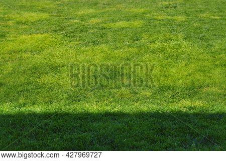 Fresh green grass background. Long fresh green grass texture background. Young green grass. lawn. Grass field ideal concept, green flooring. Natural carpet