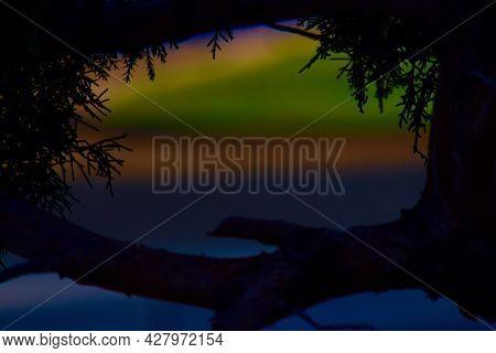 Sunset Through A Fir Bush, Canyon, Texas In The Panhandle Near Amarillo, Summer Of 2021.