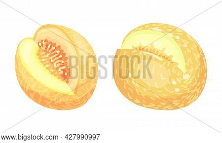 Melon Fruit With Juicy Flesh And Seeds Inside Vector Set