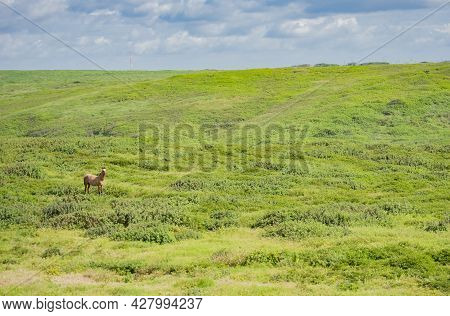 Horses Eating Grass In The Fresh Field, A Horse Grassing In The Fresh Field