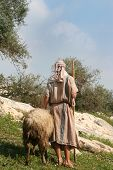 A shepherd in traditional dress leads a ram through the hills of Galilee Israel poster