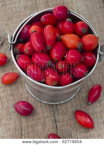 fresh red rosehips