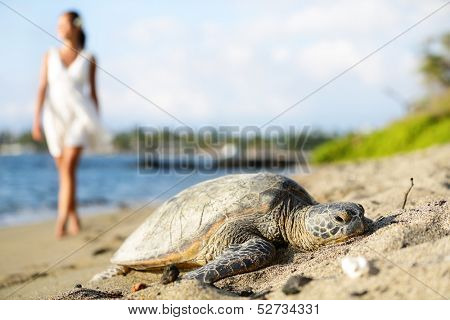 Turtle on beach. Walking woman wearing white dress in background. Sun shining in relaxed atmosphere. Hawaiian nature scene with sea turtles, Big Island, Hawaii, USA. poster