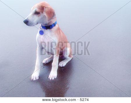 Eli The Dog