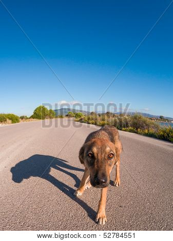 Stray dog on the road on a sunny day