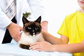 cat on the treatment by a veterinarian, next girl holding a cat poster