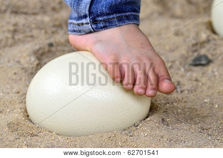 Ostrich Egg Is Strong Enough To Step Up With Feet On Its, No Breakable Ostrich Egg, Nice Foot, Feet