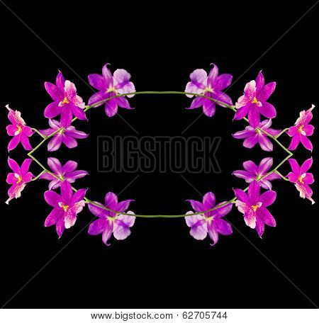 Border frame of Orchid Cambria Burrageara isolated on black background
