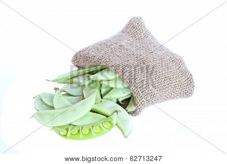 Garden Pea