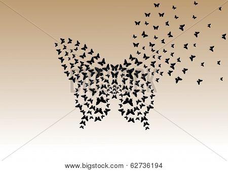 interesting design of black butterflies in butterfly