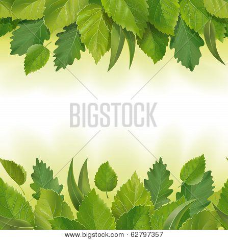 Composition of the leaves (birch, oak, eucalyptus)
