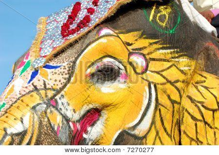 Painted elephant eye