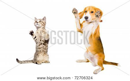 Cat and dog standing on his hind legs