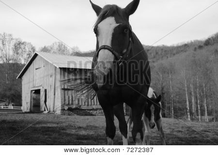 a mother horse protecting her young from the camera poster
