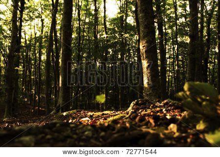 Foresta del Monte Faito