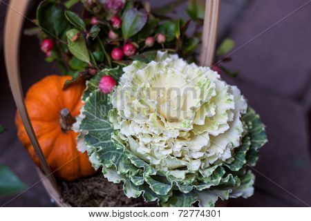 Ornamental Cabbage And Pumpkin