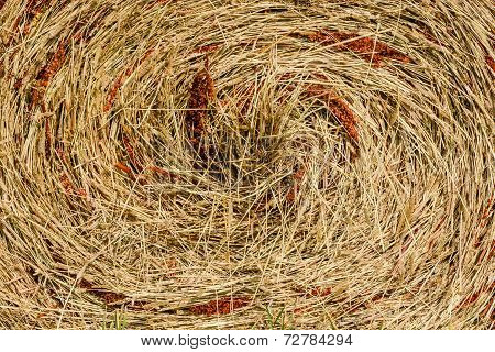 The texture of dry grass.