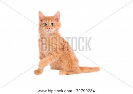 Orange Kitten With Shocked Expression