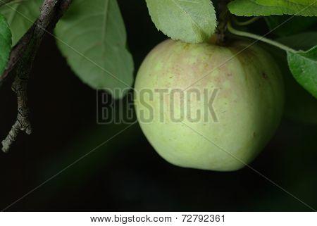 Green apple on black