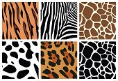vector animal skin textures of tiger, zebra, giraffe, leopard and cow poster