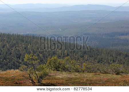 Tree And Mountains