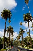 Palm trees along streets of Beverly Hills, California poster
