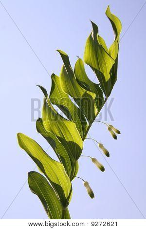 Flyer Flower