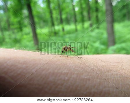 a mosquito on arm