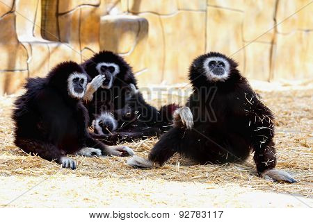 Monkeys In Zoo
