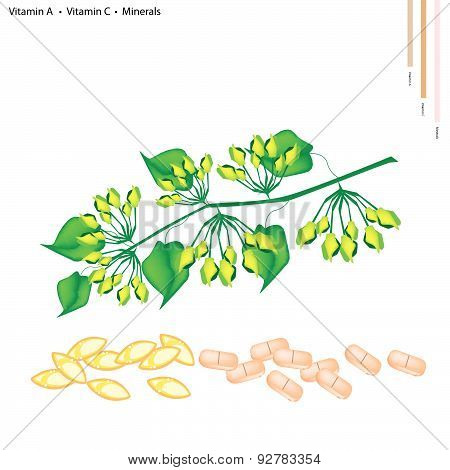 Healthcare Concept Green Cowslip Creeper or Telosma Minor Craib with Vitamin A Vitamin C and Minerals Tablet Essential Nutrient for Life.. poster