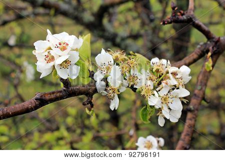 Spring time - flowers