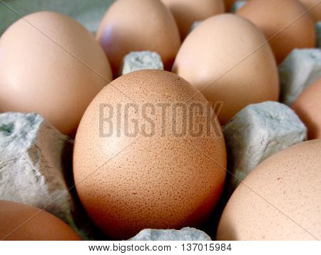 Organic, fresh, brown eggs in egg carton