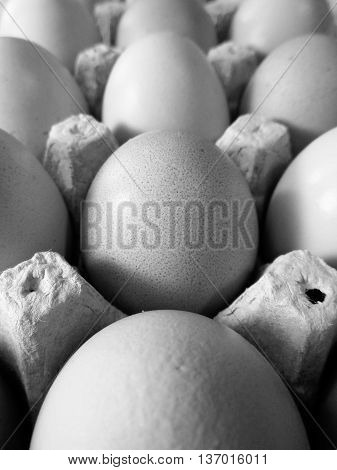 Black and white photo of brown eggs in egg carton