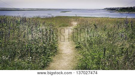 Path going through purple flowers to the water at the Fort Hill area in Eastham, MA Cape Cod.