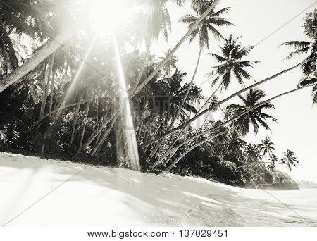 Tropical Beach Nature Outdoors Travel Destination Concept
