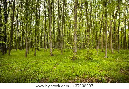 Beautiful morning in forest in spring with many trees and green grass and flowers